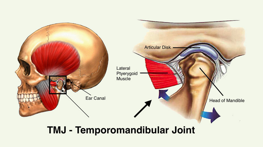 TMJ-Joint-2